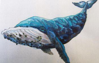 Un 1er croquis de la baleine est ensuite colorisé à l'aquarelle